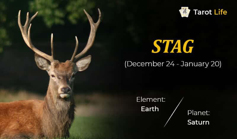 Stag-December 24- January 20