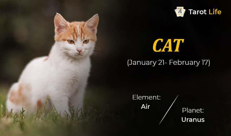 Cat-January 21- February 17