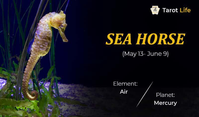 Sea Horse-May 13- June 9