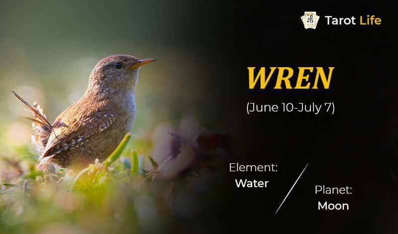 Wren-June 10-July 7