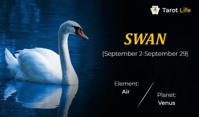 Swan-September 2-September 29