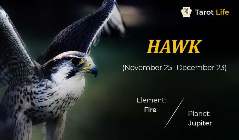 Hawk-November 25- December 23